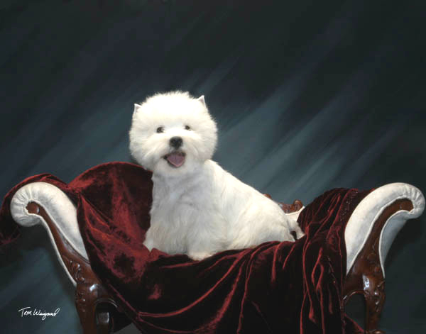 Dogs Grooming Academy In Torrance Ca